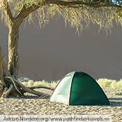 A green Unna on a sand dune in Namibia.